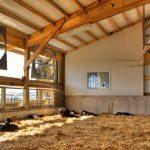 Automated Calf Feeding Facility