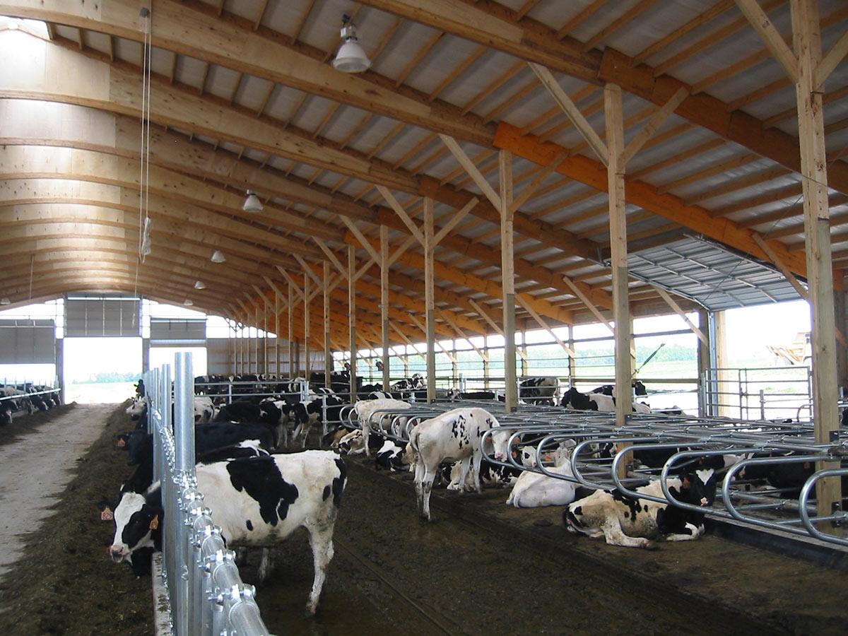 Freestall Barn